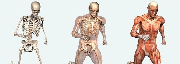 insan vücudu